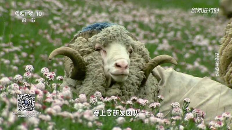 《创新进行时》 20210708 给绵羊穿衣