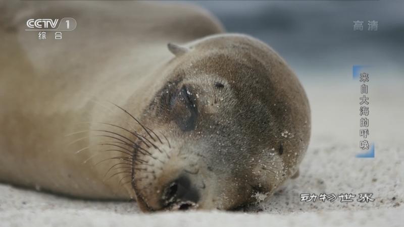 《动物世界》 20210709 来自大海的呼唤
