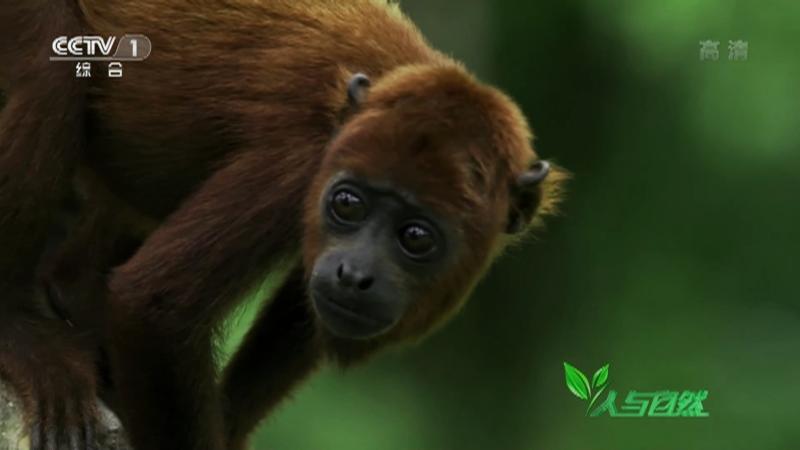 《人与自然》 20210710 亚马逊传奇——幸运的孤儿(上)