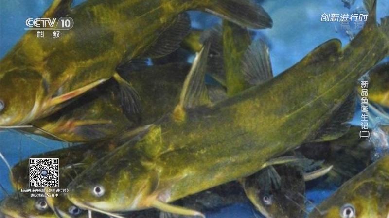 《创新进行时》 20210717 新品鱼诞生记(二)