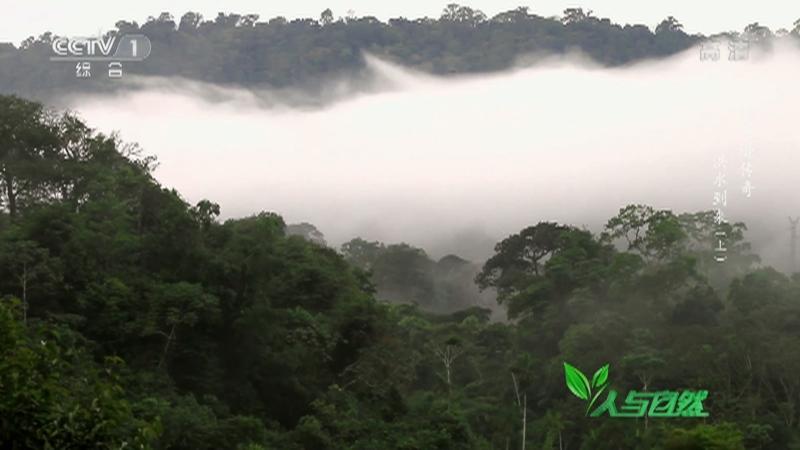 《人与自然》 20210719 亚马逊传奇——洪水到来(上)