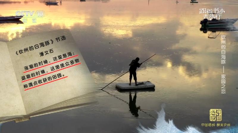 《跟着书本去旅行》 20210825 钦州的白海豚——家园之恋