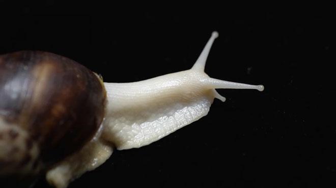 《田间示范秀》 20210830 麻鸭多产蛋 蜗牛健康长