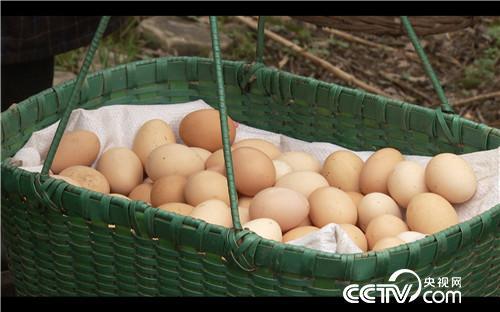 致富经:她辞职进山被质疑 卖鸡价高全靠飞 4月16日