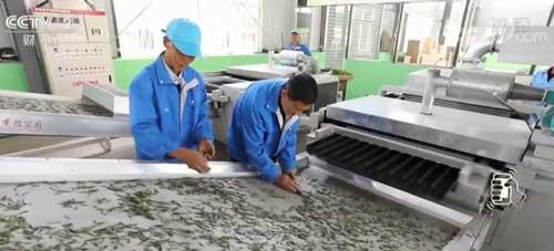 安徽六安:打造绿色茶谷 5年脱贫10万人