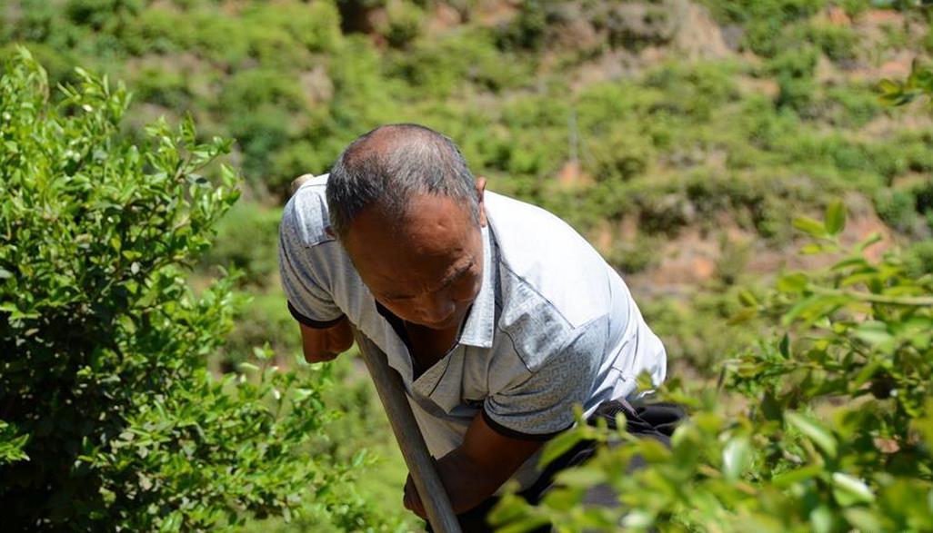 """""""断臂铁人""""兰林金在长汀县三洲镇戴坊村为油茶除草、松土"""