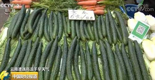 云南遭遇高温干旱天气 持续高温 菜价节节升高