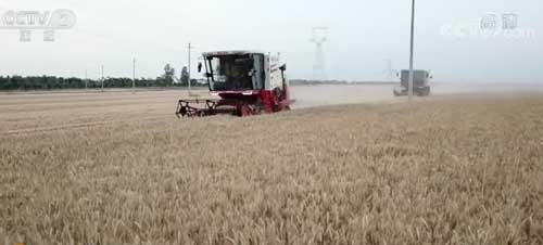 河南南阳:麦收过半 小麦品质优于往年