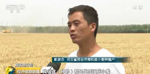 【夏收进行时】河北:品种优化技术升级 小麦销售不用愁