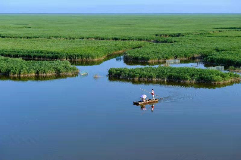 河北沧州南大港湿地