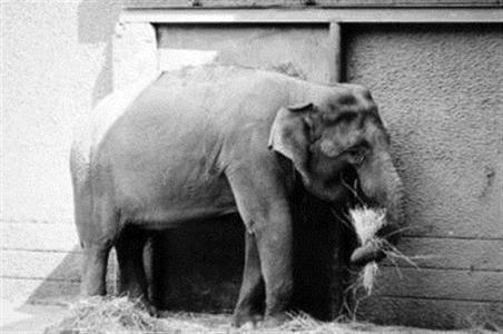 象粪纸产品成一大特色 1公斤象粪造出 60多张A4大小的纸