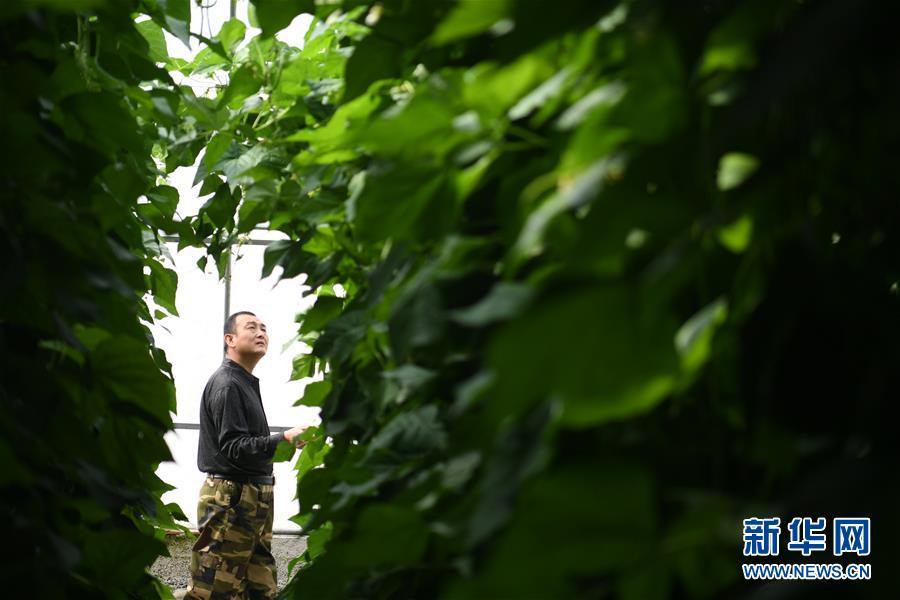 甘肃省酒泉市肃州区总寨镇村民范立德在戈壁农业产业园的日光温室内查看蔬菜生长情况(2018年4月18日摄)。新华社记者 陈斌 摄