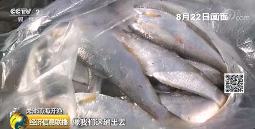 开渔归来鱼满仓 南海水产新鲜上市