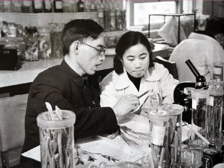在中医研究院中药研究所任研究实习员的屠呦呦与老师楼之岑副教授一起研究中药