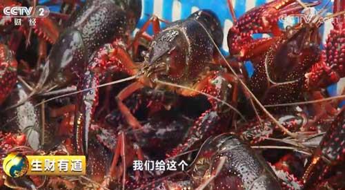 安徽滁州:美味小龙虾 富了千万家