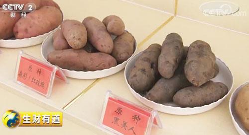 山西吕梁:着眼产业链 土豆变成金蛋蛋