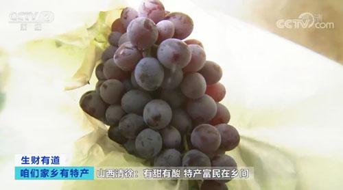 山西清徐:有甜有酸 特产富民在乡间