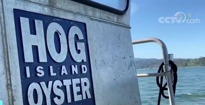 美加州牡蛎养殖业受到重创 许多行业开始复苏