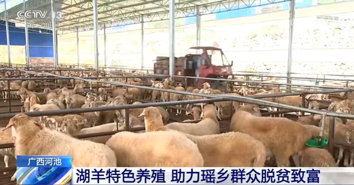 湖羊特色养殖 助力瑶乡群众脱贫致富