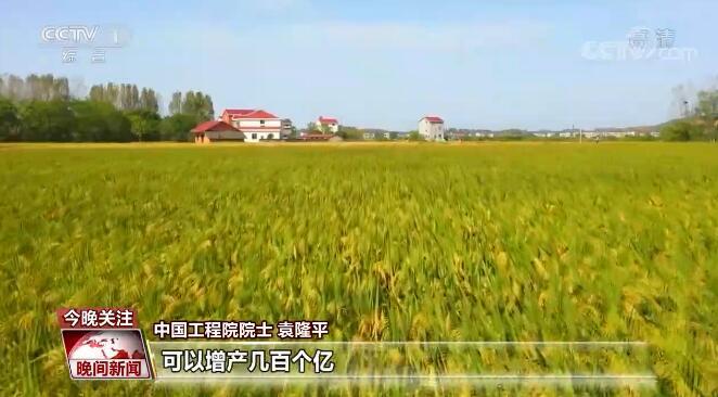 《【华宇娱乐登录注册平台】我国杂交稻亩产取得突破 为保障全球粮食安全贡献中国智慧》