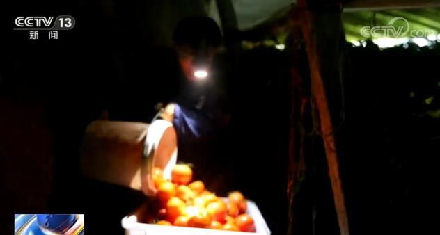 山东大棚温室保障冬季蔬菜生产供应 确保北方人的菜篮子