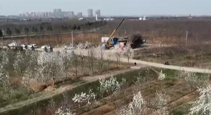 安徽肥西:苗木交易迎来旺季 村民抢抓春管植树种绿忙