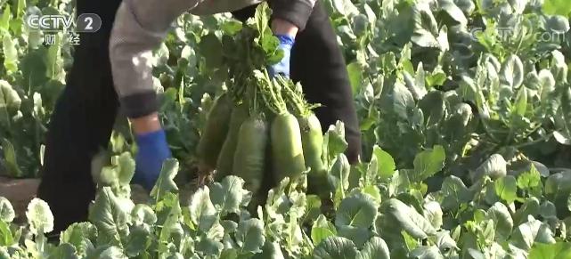 2月份全国蔬菜价格冲高回落 全国菜篮子指数为143.94