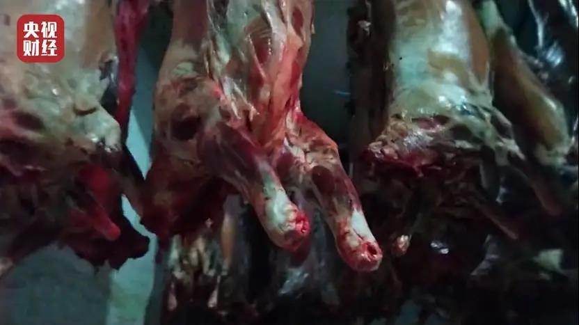 3·15晚会曝光丨又见瘦肉精!瘦肉精羊流向多地!