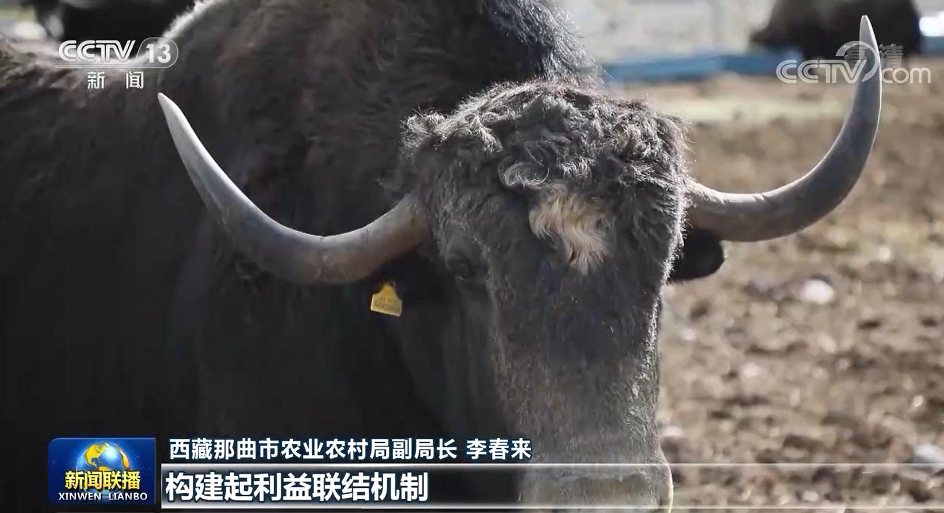 【奋斗百年路 启航新征程·今日中国】西藏:雪域高原的历史巨变