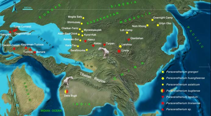 甘肃临夏发现巨犀化石:有4头大象那么重,曾迁徙穿越青藏高原插图(5)