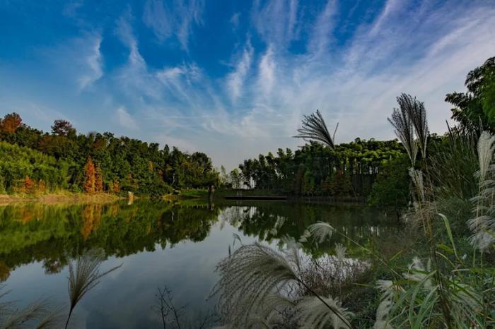 良渚古城外围水系统各秋坞水坝遗址,林天立 摄。良管委供图