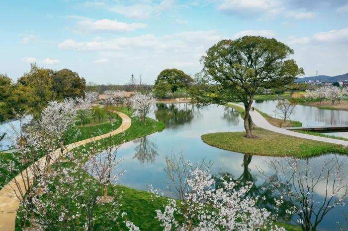良渚古城遗址公园樱花湖 。良管委供图