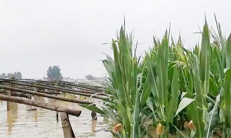 财政部支持保险公司用足用好农业保险保费补贴政策 助河南防汛救灾